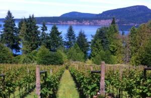Sea Star Wines
